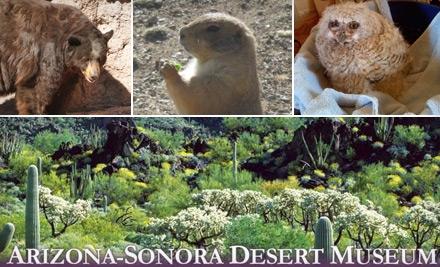Arizona-sonora-desert-museum