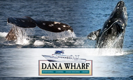 Top sportfishing daily deals coupons in los angeles by for Dana wharf fishing