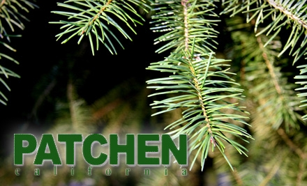 $20 for $40 Worth of Self-Cut Christmas Trees, Wreaths, and More at Patchen California in Los Gatos