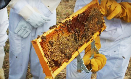 2.5-Hour Introductory Beekeeping Class for One or Two at Round Rock Honey (Up to 68% Off)
