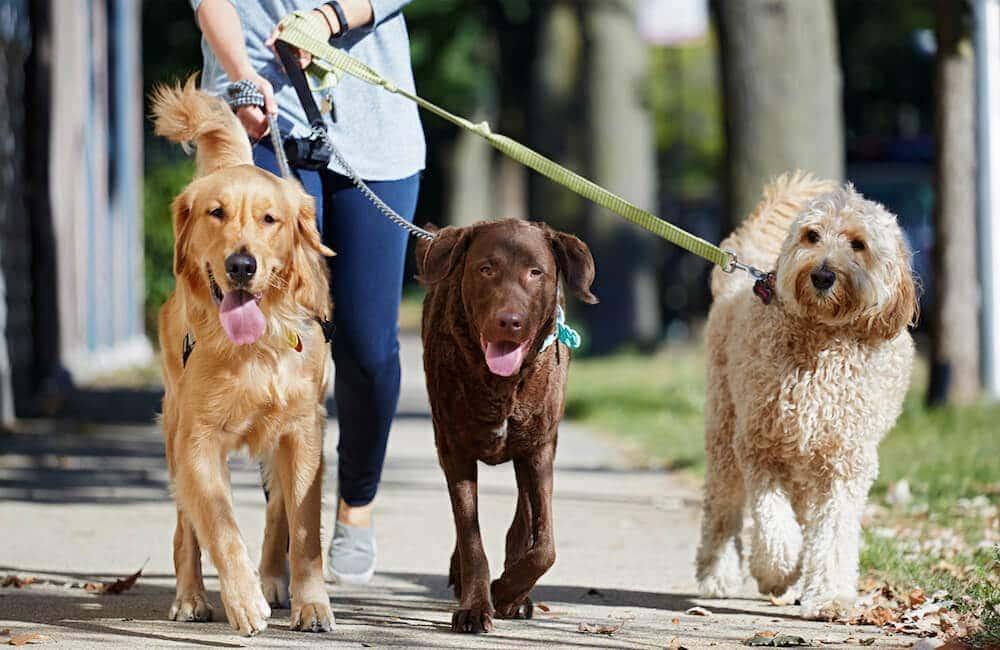 Image of: Pet Groupon Starting Dog Walking Business